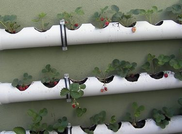 How to Make Strawberry Care in PVC Pipe