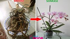 Ways to Revive the Orchid